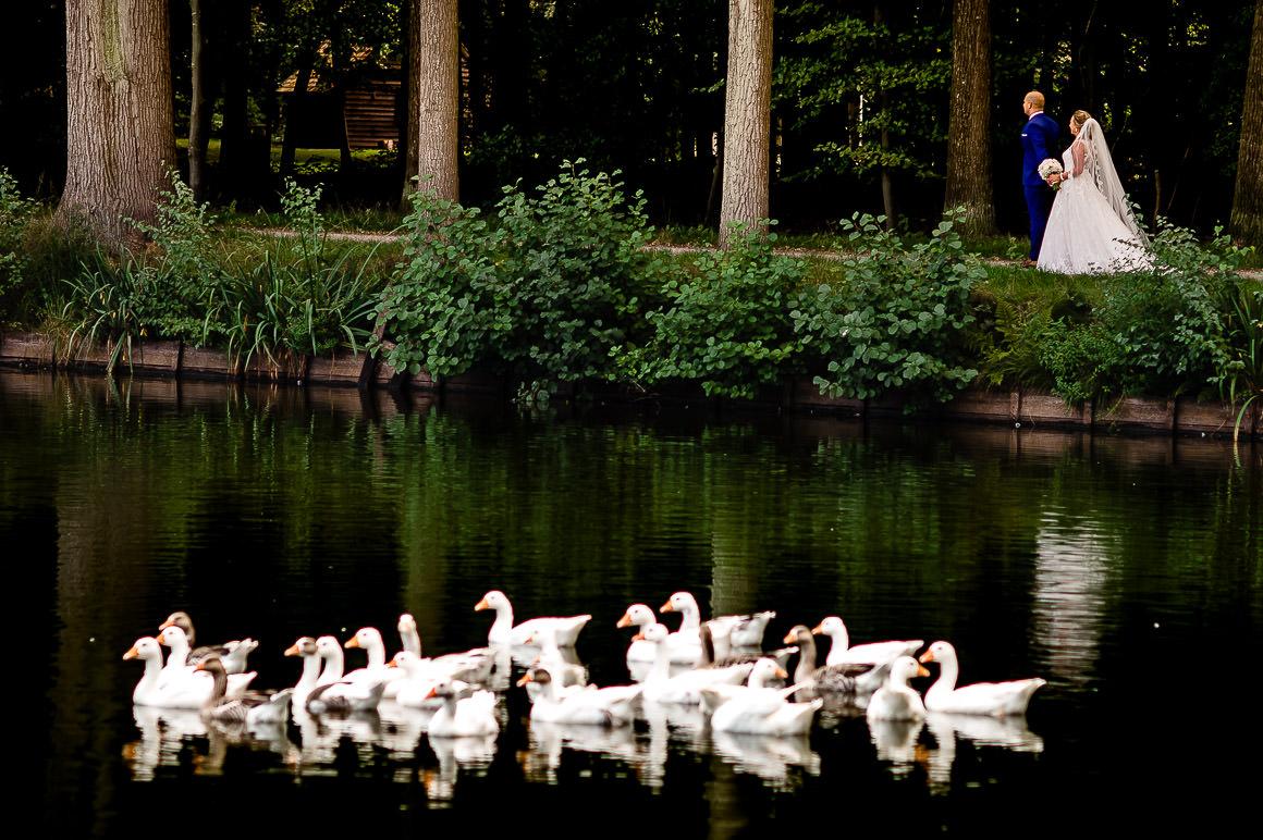 bruidspaar in het gezelschap van heel veel witte eenden